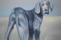 dogge, 50x70, öl auf leinwand